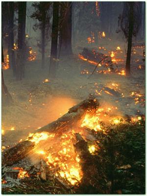 Лесные и торфяные пожары. Что делать, когда горят торфяники?