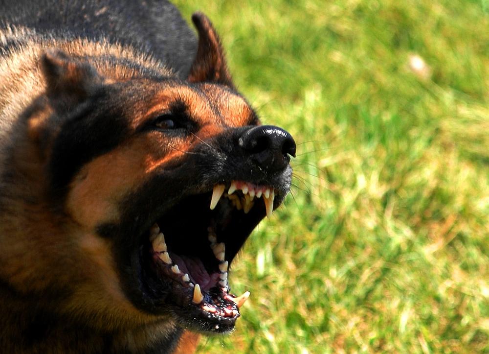 Бродячая угроза: как защититься от нападения собак
