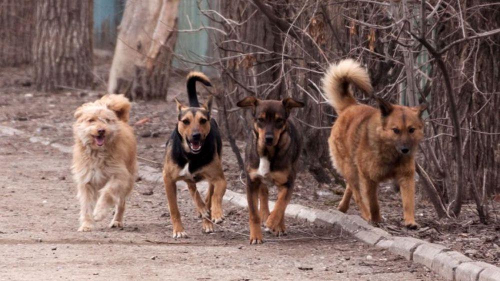 Не беги и не бойся: как защититься от бездомных собак