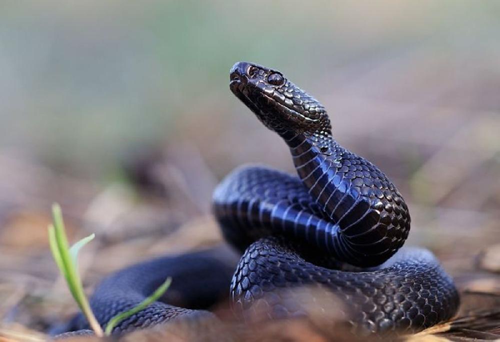 Первая помощь при змеином укусе и отравлении